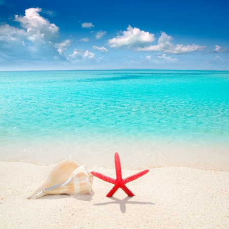 Photo for Starfish and seashell in white sand beach with turquoise tropical water - Royalty Free Image