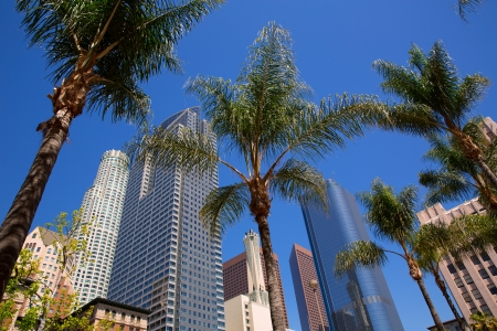 Photo for LA Downtown Los Angeles Pershing Square palm tress and skyscrapers - Royalty Free Image