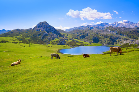 Photo pour Ercina lake at Picos de Europa in Asturias of Spain - image libre de droit