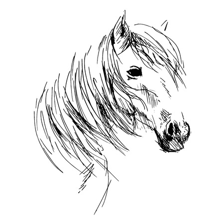 Illustration pour Hand drawing horse head - image libre de droit