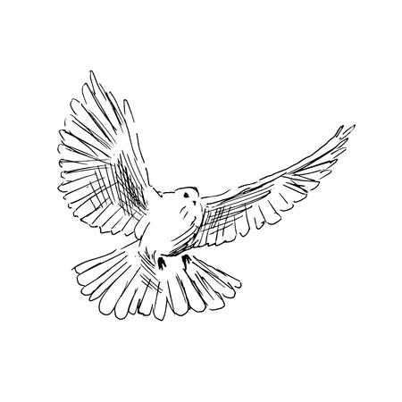 Illustration pour Hand drawing dove - image libre de droit