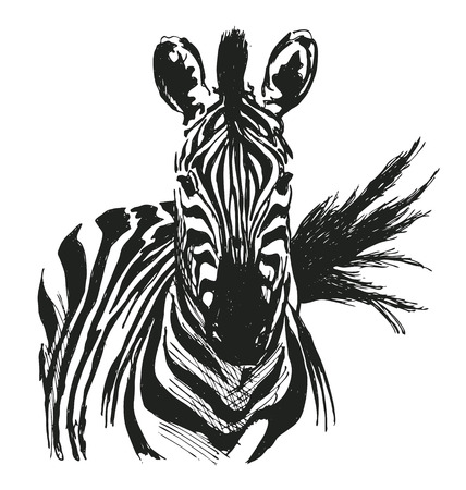 Illustration pour hand drawing zebra - image libre de droit