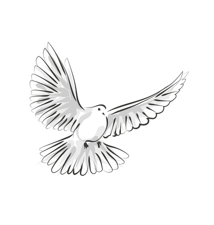 Illustration pour Vector line sketch dove - image libre de droit