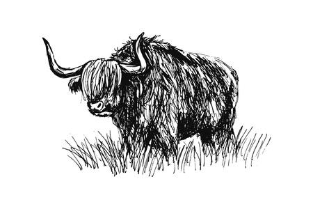 Illustration for Hand sketch bull. Vector illustration - Royalty Free Image