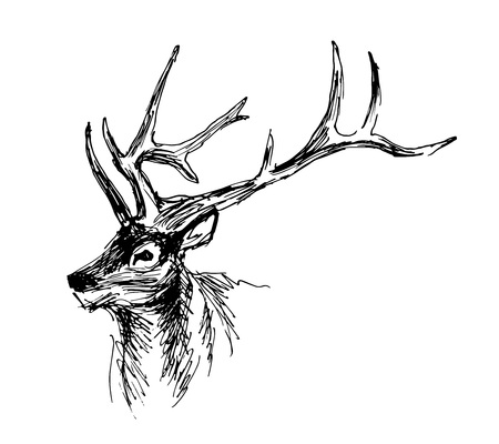 Illustration pour Hand sketch head deer. Vector illustration - image libre de droit