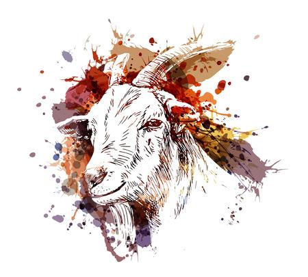 Illustration pour Vector color illustration head of goat - image libre de droit