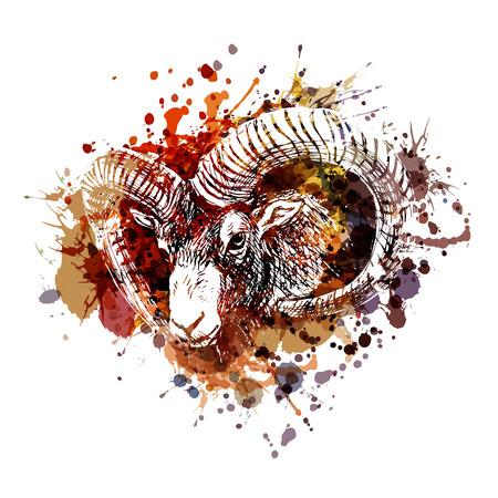Ilustración de Vector color illustration mouflon head - Imagen libre de derechos