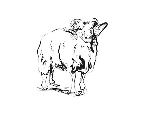 Ilustración de Vector sketch of ram - Imagen libre de derechos