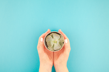 Creative flat lay of woman hands holding small pot with green decorative succulent plant with copy space on turquoise paper background in minimalism style. Template for feminine blog, social media