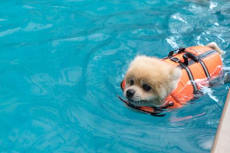 Foto de dog swimming in the pool - Imagen libre de derechos