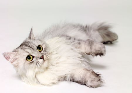 Close-up of a cat lying down