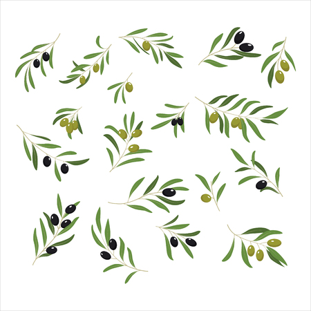 Illustration pour Olive Branches with Olives green and black. Vector Illustration - image libre de droit