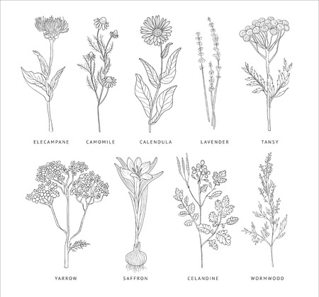 Illustration pour Medical Herbs Vector Set. Hannd drawn Monochrome Style - image libre de droit