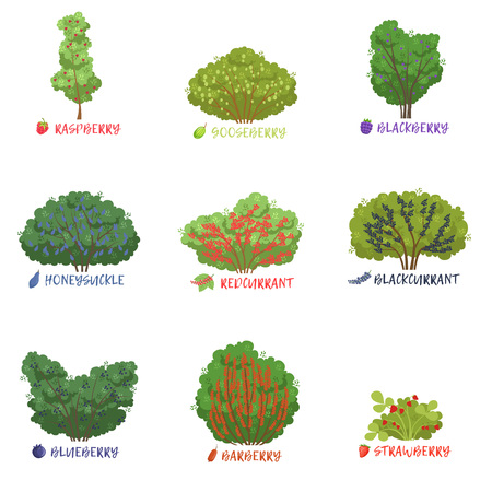 Ilustración de Different garden berry shrubs sorts with names set, fruit trees and berry bushes vector Illustrations on a white background - Imagen libre de derechos