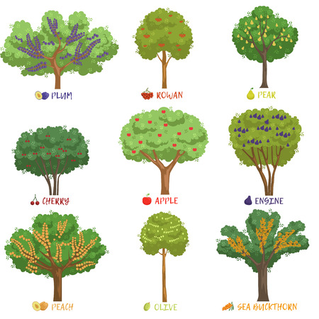 Illustration for Different fruit trees sorts with names set, garden trees and berry bushes vector Illustrations on a white background - Royalty Free Image