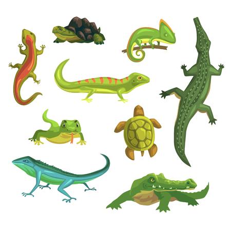 Illustration pour Reptiles and amphibians set of vector Illustrations - image libre de droit