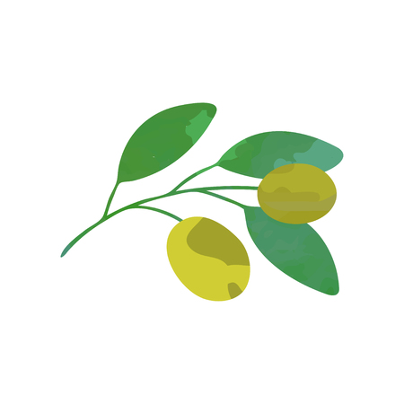 Illustration pour Vector olive branch with green leaves. Natural icon in flat style. Healthy product. Botanical illustration design - image libre de droit