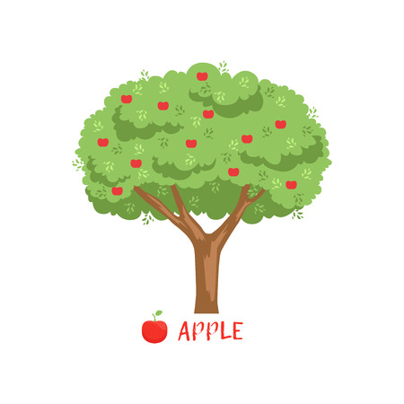 Ilustración de Apple garden fruit tree with red apples and name vector Illustration - Imagen libre de derechos
