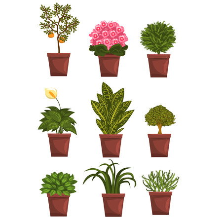 Illustration for Set of pot deciduous, flowering, fruit plants with flowers and leaves. Anthurium, mandarin, violet, bonsai, pipal. Home natural design elements. Gardening hobby. Vector illustration isolated on white. - Royalty Free Image