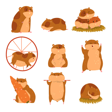 Illustration pour Cute cartoon hamster characters set, funny animal in different situations vector Illustrations - image libre de droit