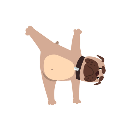 Ilustración de French bulldog in yoga pose, funny dog practicing yoga cartoon vector Illustration on a white background - Imagen libre de derechos