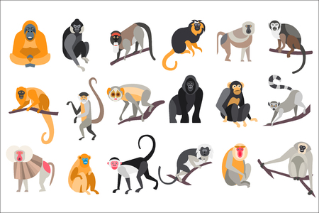 Illustration pour Collection of different breeds of monkeys vector Illustrations on a white background - image libre de droit
