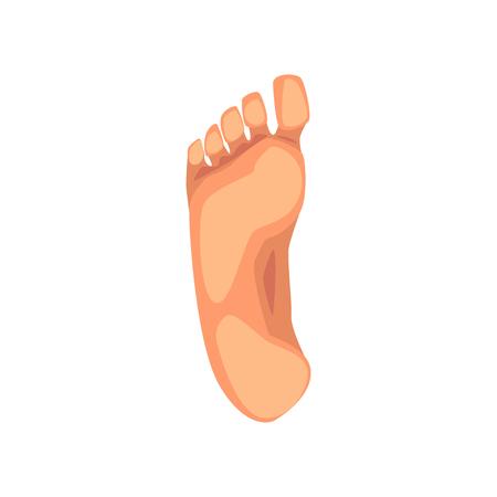Ilustración de Foot sole, male body part vector Illustration on a white background - Imagen libre de derechos