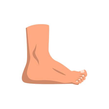 Ilustración de Human foot standing vector Illustration on a white background - Imagen libre de derechos