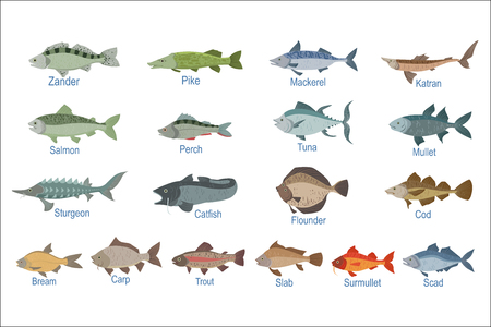 Illustration pour River Fish Identification Slate With Names. Realistic Infographic Illustration In Simple Style On White Background. - image libre de droit