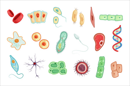 Illustration pour Anatomy of human cells set of detailed vector Illustrations on a white background - image libre de droit