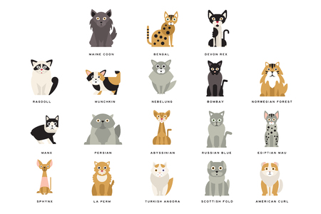 Illustration pour Different flat breeds of cats. Domestic popular and rare exotic animals. Cartoon home pet design. Collection different kitten. Funny characters. Vector illustration collection isolated on white. - image libre de droit