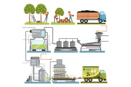 Ilustración de Olive oil production process stages, harvesting olives, packing of finished products and delivery to consumer vector Illustrations isolated on a white background - Imagen libre de derechos