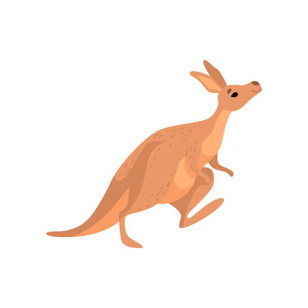 Illustration for Kangaroo, Cute Brown Wallaby Australian Animal Character Vector Illustration on White Background. - Royalty Free Image