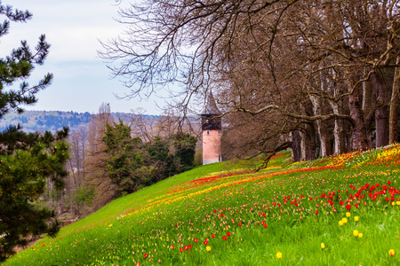 Photo for Colorfull spring flowers on the island of flowers Mainau, Lake Constance, Germany - Royalty Free Image