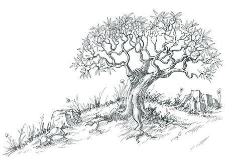 Illustration pour Olive tree graphic  - image libre de droit