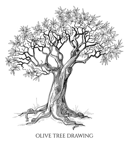Illustration pour Olive tree isolated hand drawn vector  - image libre de droit