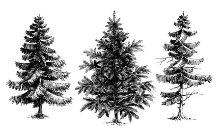 Illustration pour Pine trees / Christmas trees realistic hand drawn vector set, isolated over white - image libre de droit