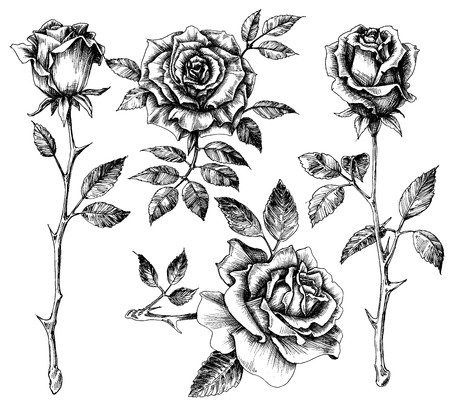Illustration pour Hand drawn flower set, rose collection - image libre de droit