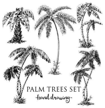 Illustration pour Detailed palm trees set - image libre de droit