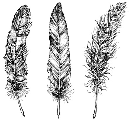 Ilustración de Detailed feathers isolated - Imagen libre de derechos