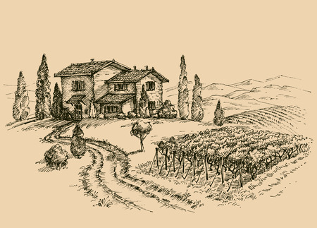 Illustration pour Vineyard drawing. Traditional farm sketch - image libre de droit