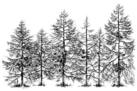 Illustration pour Pine forest hand drawn border - image libre de droit