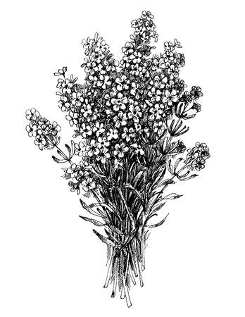Ilustración de Lavender flower bouquet, floral engraving vector design - Imagen libre de derechos