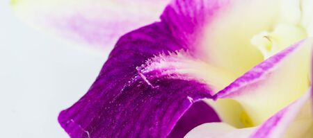 Photo for Close up orchid flowers - Royalty Free Image