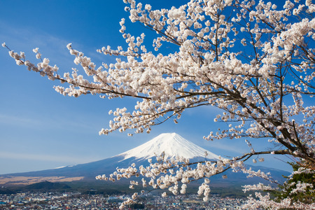 Photo pour Mountain Fuji and cherry blossom sakura in spring season - image libre de droit