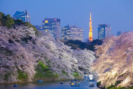 Photo pour Beautiful sakura cherry blossom light up and Tokyo Tower landmark at Chidorigafuchi Tokyo - image libre de droit