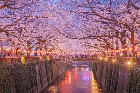 Photo pour Tokyo sakura cherry blossom with light up at Nakameguro , Tokyo - image libre de droit