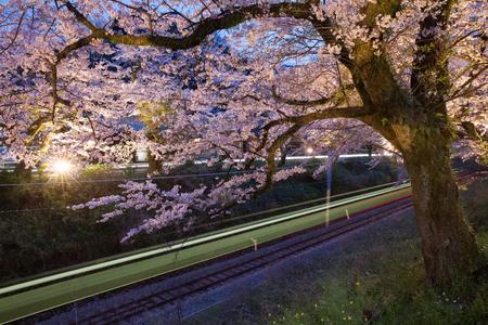 Foto de Sakura , Cherry blossom tree with light of train at night - Imagen libre de derechos
