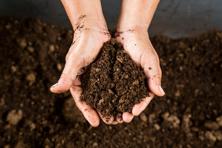 Photo for close up hand holding soil peat moss - Royalty Free Image
