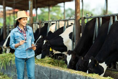 Foto de Farmer have recording details on the tablet of each cow on the farm. - Imagen libre de derechos